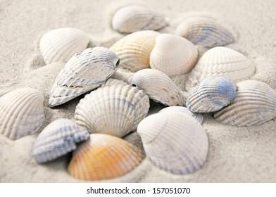 couple of shells