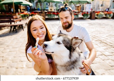 Couple sitting on the square in the summer and feeding the alaskan malamute dog ice cream. Family, pet, animal and people concept.