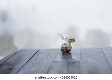 couple of snails move on wood table