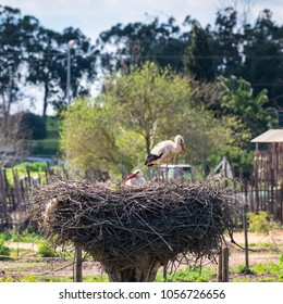 a couple of storks inside their nest tending to their eggs