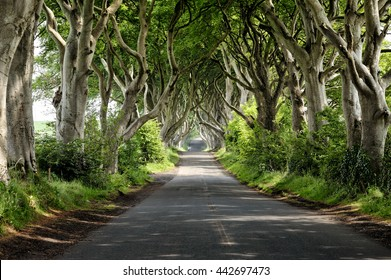 A couple stroll in a beautiful landscape along a road under an old canopy of trees in Northern Ireland