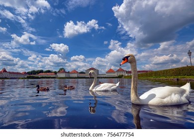 Couple of Swans in the fountain in front of the Nymphenburg Castle Munich. Sky with white clouds. Huts and lampposts beside the fountain. Snap of 26 June 2015 12:43