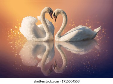 Couple of swans and reflection on the water