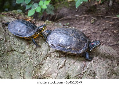 Couple of tortoises