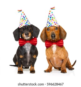 couple of two dachshund or sausage  dogs  hungry for a happy birthday cake with candles ,wearing  red tie and party hat  , isolated on white background