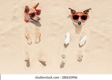 couple of two dogs buried in the sand at the beach on summer vacation holidays , having fun and enjoying ,wearing red sunglasses