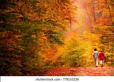 Couple walking in the forest in fall. Quqbec, Canada.