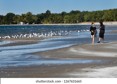Couple walking on beach sandbar with seagulls at Outlet Beach of Sandbanks Provincial Park in Prince Edward County on Lake Ontario, Canada - September 30, 2017
