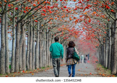 A couple walking on the road with kapok blossoms in Taiwan.