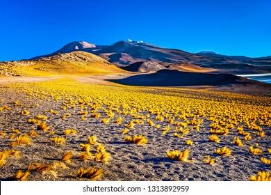 Couple walking in Piedras Rojas (Red Rocks), Deserto do Atacama (Atacama Desert), Chile
