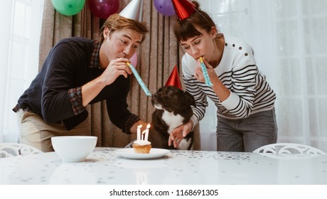 Couple wearing birthday caps and blowing whistle celebrating birthday of pet dog. Man and woman celebrating birthday of dog with candles on a cup cake.