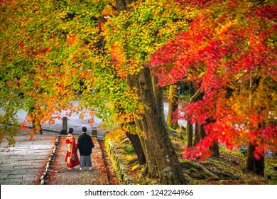 A couple wearing traditional Japanese Kimono and Yukata with colorful red maple trees in autumn, Kyoto Japan