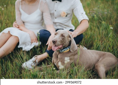 couple in wedding attire and hunting dog sitting in the grass at sunset