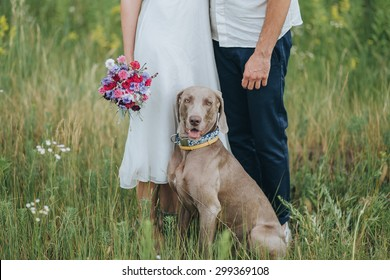 couple in wedding attire and hunting dog breed are in the field at sunset