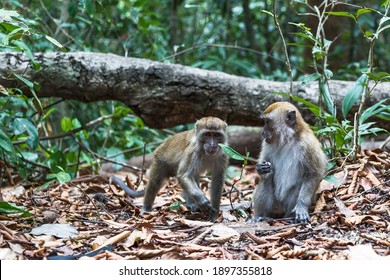 couple wild monkey sitting in the jungle