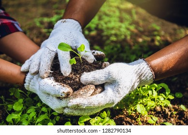 Couples help grow vegetables. dig into soil the vegetable garden cultivation and separate the early growth. plant vegetable Chinese cabbage