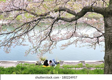 Couples love sit relaxing under the sakura trees