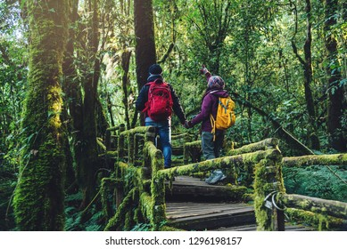 Couples traveling, relax in winter. walking travel to study nature in the rainforest. at the angka, Chiangmai in Thailand.