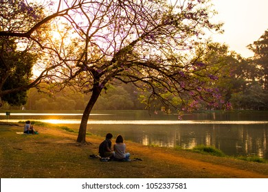 Couples watching an awesome sunset by the lake at Ibirapuera Park, Sao Paulo, Brazil. Beautiful sunlight in the afternoon. Panoramic landscape, romantic environment. Purple flowers. Golden hour