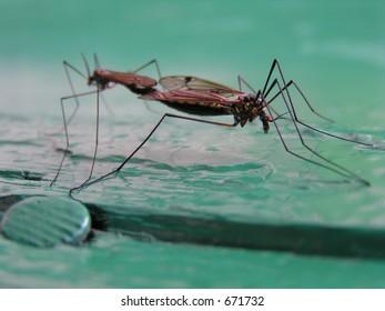 Coupling mosquitos