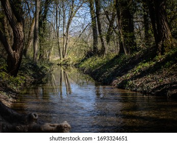 Course of the stream in a sunny composition