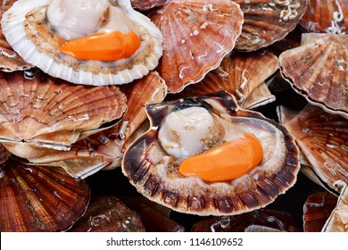 Courseulles sur Mer, France - april 22 2018 : close up of scallop at the fish market