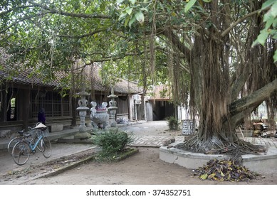 Courtyard and entrance to the famous and ancient But Thap buddhist temple.  With a shady fig, or banyan, tree and  bicycles with a woman's conical hat.
