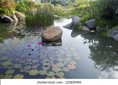 Courtyard landscape of modern residential building-Courtyard pond and water lilies