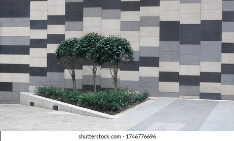Courtyard, passageway in the city's central business district.  There is a small garden bed with three topiary trees. The courtyard is outside 12 Shelly Street, Sydney