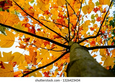 Cover of orange leaves on top of a tree. Autumn in Holland.