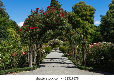 A covered flower covered archway in a rose garden