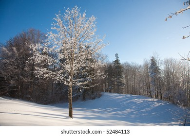 Covered with frost tree in winter.