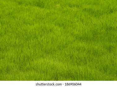 covered with green grass  background