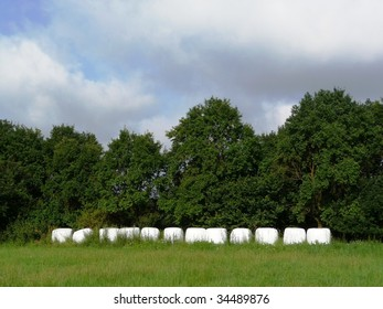 covered hay bales looking like marshmallows