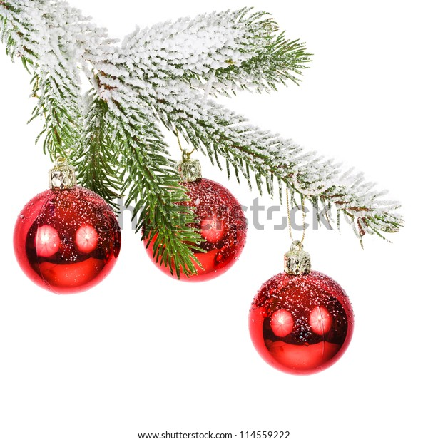 covered with snow branch of a Christmas tree and three brilliant red balls  isolated on white background