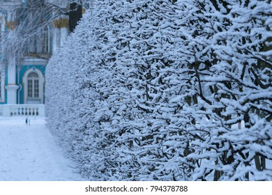 Covered with snow trees and ground in the park, beautiful alley