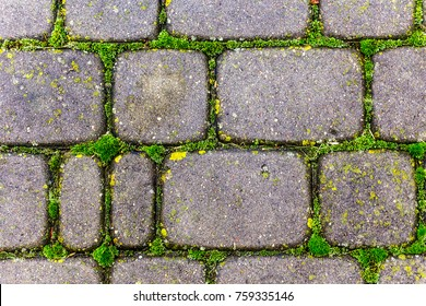 Covering the street with gray paving stones. . Seams are overgrown with green moss. An interesting texture for your site about the village, roads, nature.