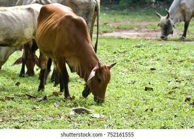 Cow and calf on grass