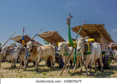 Cow cart Festival in Plaosan temple complex on Sunday 5 September 2018 To preserve the cow carts that are ancestral heritage in the form of traditional transport tools.