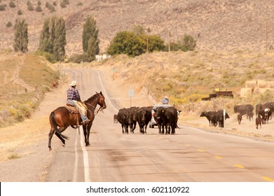 Cow cattle and cowboys on Outback Scenic Byway in rural Oregon
