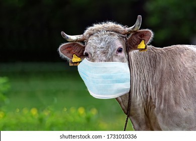 Cow in a clearing in the mask