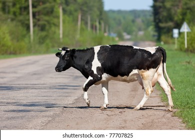 The cow crosses road in forest village