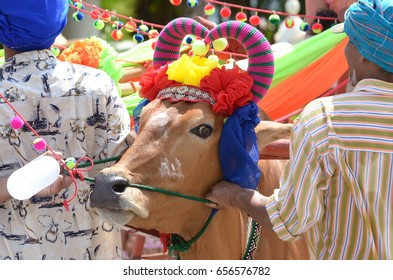 A cow dressed in parade.