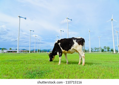 Cow eating grass in the farm with windmill