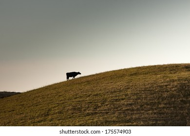 Cow going uphill in the horizon