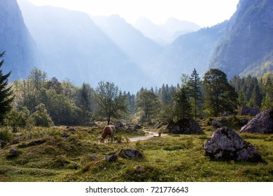 Cow grazing near path and mountain