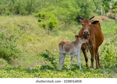 The cow and her baby stand under the tree. The back is a lot of trees. And the sky is beautiful.