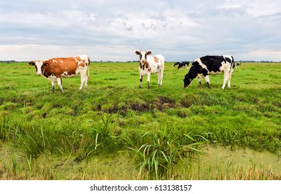 Cow herd grazing in field
