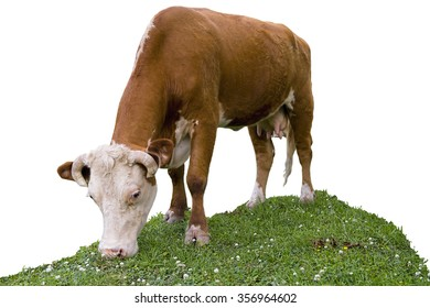 Cow Isolated on White Background