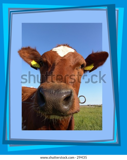 Cow looking through a frame - 3D look